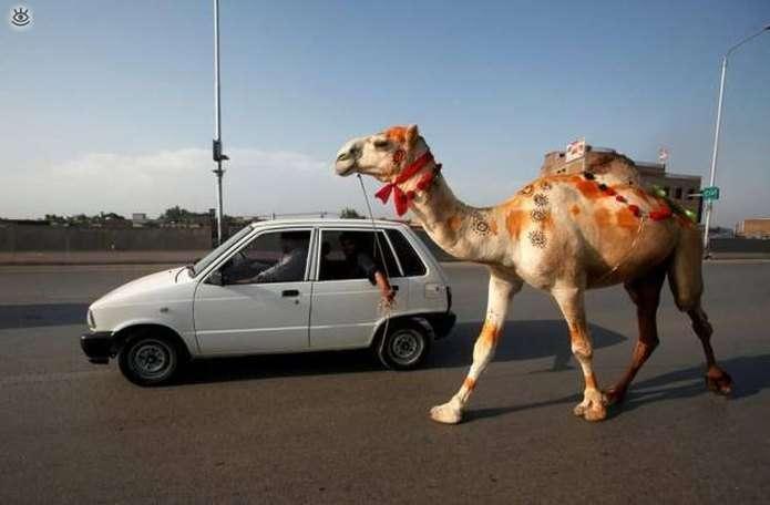 Чудові автомобільні і дорожні веселі фотки (50 фото)